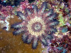 Critters at Hawaiian Dive Sites