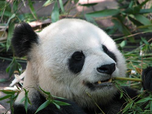 Google Panda Update Algorithm
