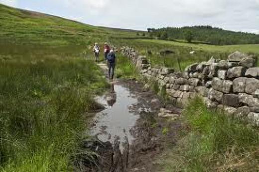 Footpath looks well used to Newton Moor