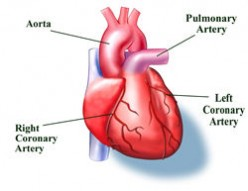 Heart Attack,Causes Symptoms Treatment and Prevention