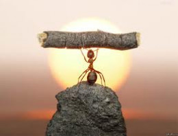 When you think you can't try any harder, think about an ant.