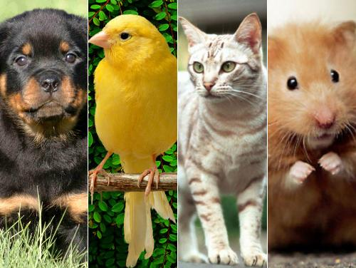 There is an astounding array of choices when finding a family pet.