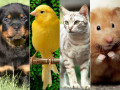 Choosing a Family Pet: A Homemaker's Guide