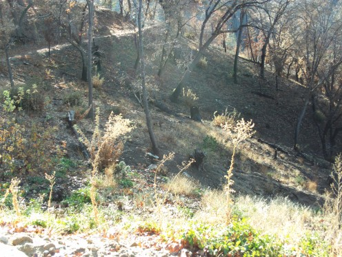 The Grass Valley Fire swept through this area in 2007.