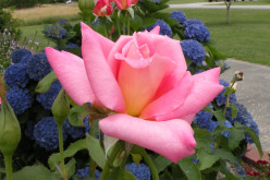 Summer Flowers Photos from My North Carolina Garden