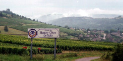 French Wine Regions - Burgundy
