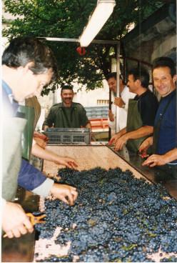 Grapes at  Romanee Conti