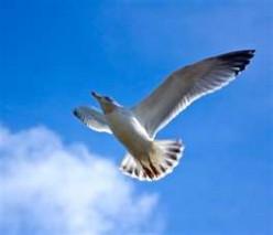 Glide Like A Bird