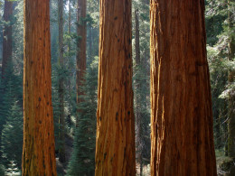 Redwood Canyon in Sequoia National Park