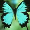 lovelyladyss profile image
