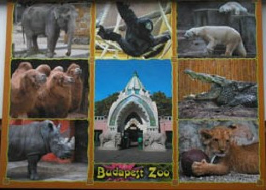 A postcard of Budapest Zoo