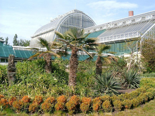 The palm-house in the zoo