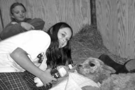 the girls having their sleep over in Jeffery's room the sick little alpaca had a fun night.
