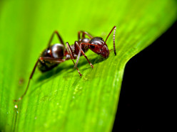 How to Kill Ants on Vegetables (Gardening)