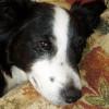 Bertie Squibble profile image