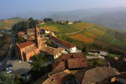A Barolo Vineyard