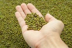 Health Benefits of Green Mung Beans