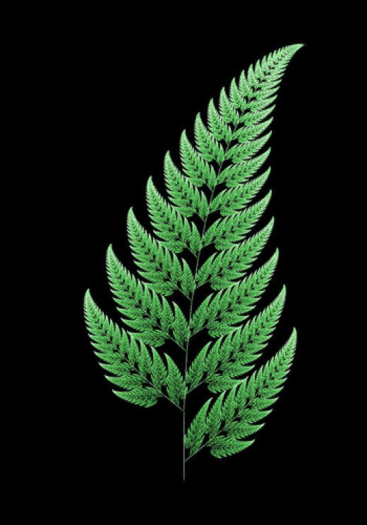 Fractal Fern from roddh Source: flickr.com