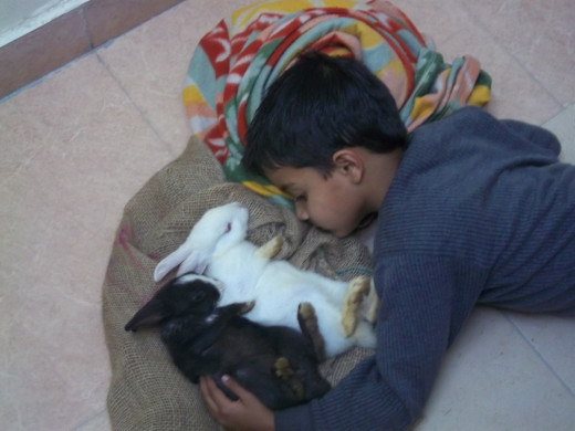 My rabbits do share a lot of belongingness with my son even without uttering a single word. Love is belongingness at a level that brain may fail to understand.
