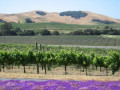 Tours and Jobs in Napa Valley California