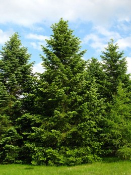The trees convert carbon dioxide into oxygen by the process callled photosynthesis. Such lush green trees make a nice scenery and clean the air
