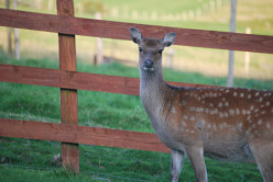 Life in the Dublin Mountains: Deer, Rabbits and Other Critters.