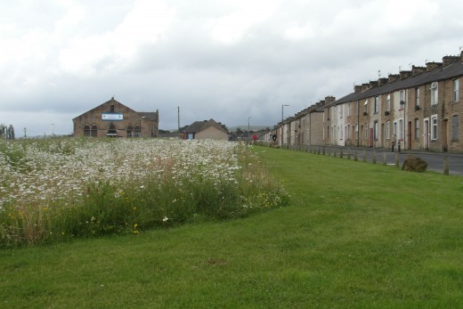 Wild flower meadow at Crowther Street, Burnley
