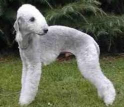 7 World's Weirdest Looking Dog Breeds