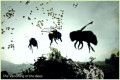 The Bayer-Monsanto Bee Killing Team