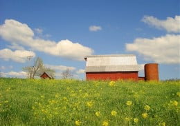 Local Small Farm