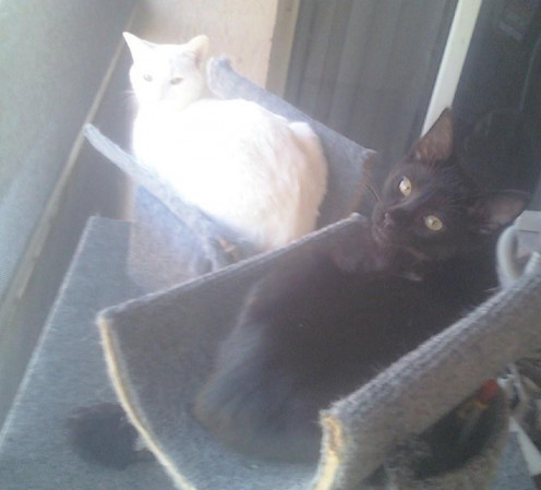 Here are my furry babies.  My female cat is white and my male cat is black.