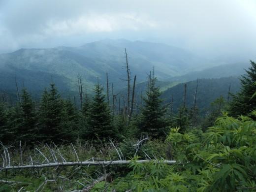 Great Smokey Mountain National Park with high, uniform precipitation and high year around humidity.