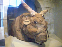 Bull Mummy at the Smithsonian