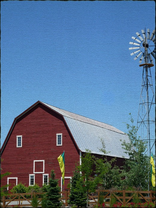 A preserved barn is the backdrop for a community orchard and garden at Meadow Ranch.