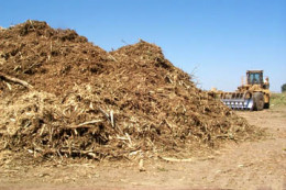 Mountain of wood pulp