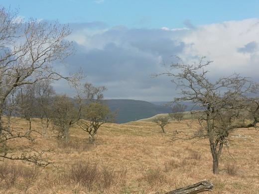Bastow wood, North Yorkshire