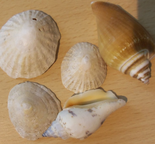 Gather some shells for craft projects at home