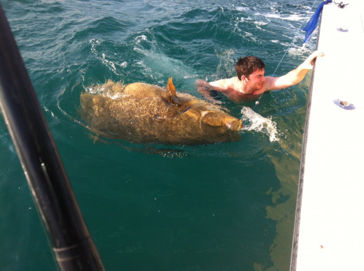 Naples, Florida - goliath grouper