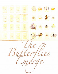 The Butterflies Emerge