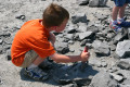 How to Find Fossils