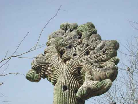No shooting Saguaro Cactus in Arizona! These holes were actually made by birds, but shooting causes even more damage.