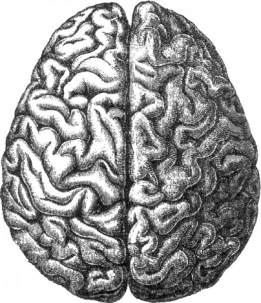 Brainsss...