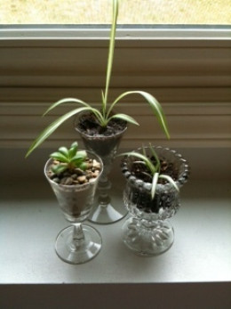 3 miniature glass gardens  (5-6 inches tall)