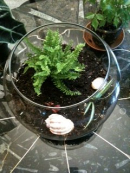 Miniature terrarium created in less than 30 minutes as a family activity