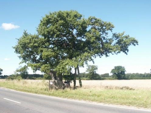 Kett's Oak, Hethersett.