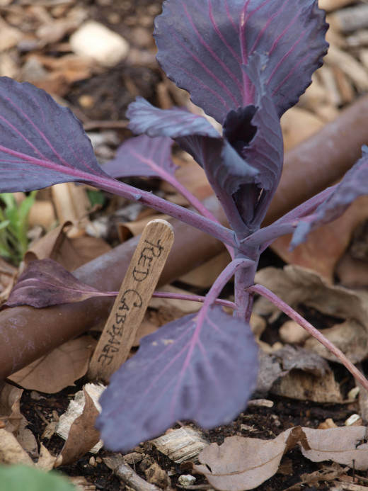 A school vegetable garden teaches kids about growing food and provides fresh vegetables.