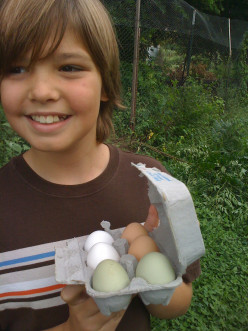 Green school lunches (Part 4) - How sustainable is the food you eat?