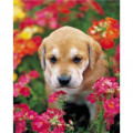 How To Potty Train Puppy - Training Puppies