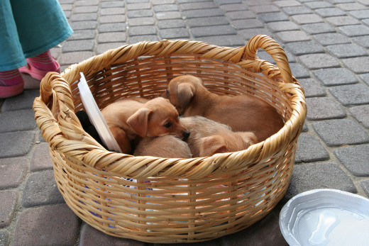 Baskets with some cushioning can be used as small dog beds.