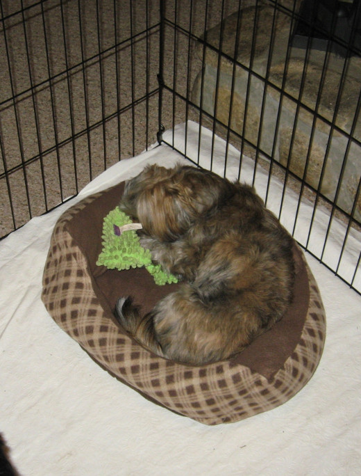 Samantha likes taking a toy to bed with her.